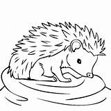 Hedgehogs Getdrawings Thirsty Kleurplaten Bulkcolor sketch template