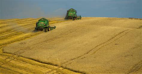 corn field  daytime  stock photo