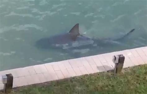 shark florida attack victim bite into swims backyard stable despite head ibtimes close