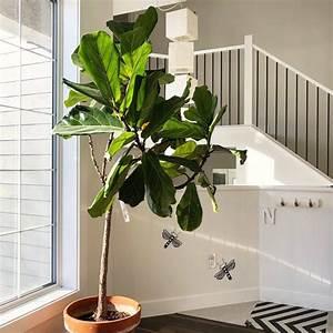 10, Best, Low, Maintenance, Indoor, Plants