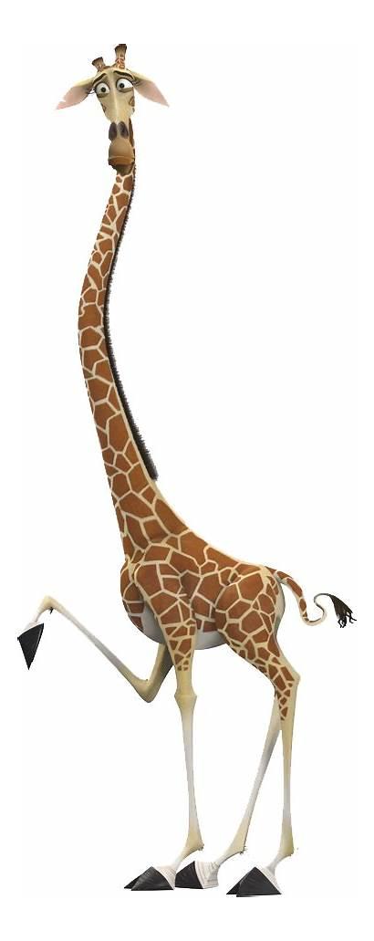 Madagascar Giraffe Melman Gloria Alex Hypochondriac Zoo