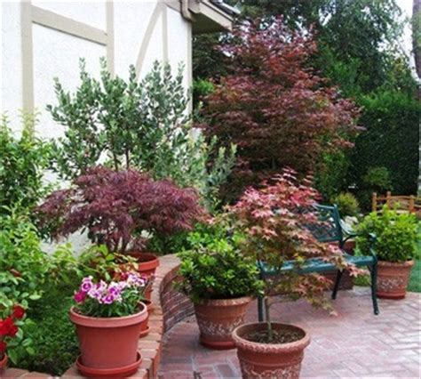 potted japanese maples s house patio japanese maple gardens and plants
