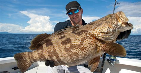 grouper fish cook recipes way calories soup fillet recipe head bones amazing useful give making does information