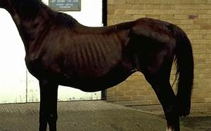 Kidney  Renal Failure In Horses