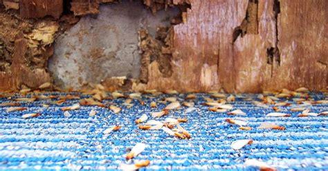 buy  home  termite damage bankratecom