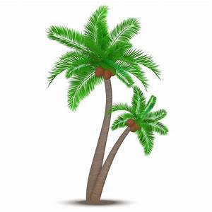 Coconut Trees Vectors, Photos and PSD files | Free Download