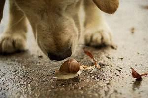 are snails poisonous dogs