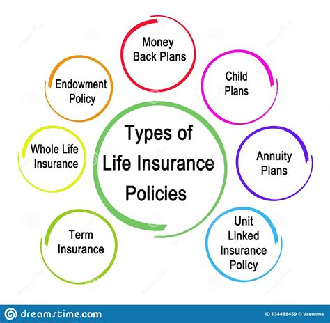 The two main types of life insurance. Types Of Life Insurance Policies Stock Illustration - Illustration of safety, linked: 134488459