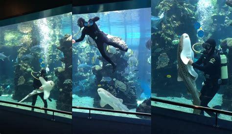 comment choisir le meilleur aspirateur aquarium tests