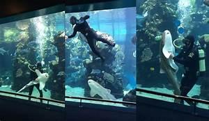 Acheter Un Aspirateur : comment choisir le meilleur aspirateur aquarium tests ~ Premium-room.com Idées de Décoration