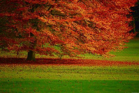 nature hd desktop wallpaper wallpapersafari