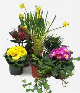 Pflanzen Für Innen : pflanzen set f r schale und k bel pflanzen versand harro 39 s pflanzenwelt kaufen bestellen online ~ Sanjose-hotels-ca.com Haus und Dekorationen
