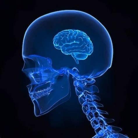 Expanding Brain Meme Template Create Meme Quot Human Brain Expanding Brain Our Brain