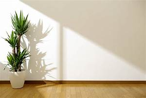Pflegeleichte Pflanzen Für Die Wohnung : pflanzen die kaum licht brauchen heimhelden ~ Michelbontemps.com Haus und Dekorationen