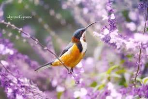 Purple Flower and Bird