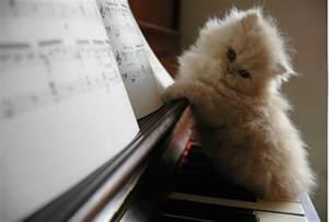 piano cat pictures piano forum