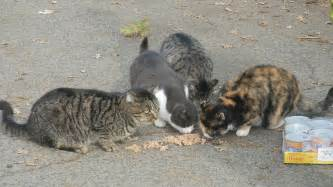 cat colony mooney s grove s feral cats in danger of being eliminated