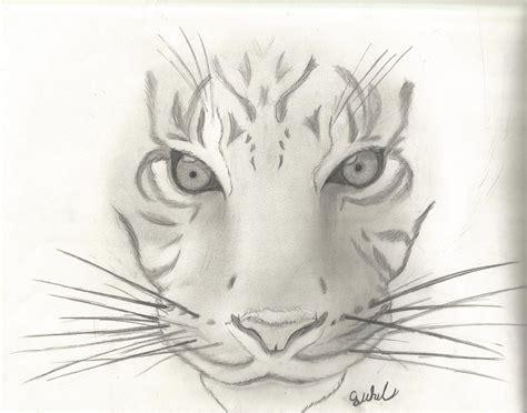 animal sketch  tiger  cjwhit  deviantart