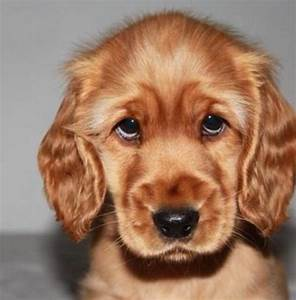 Cute Puppy Eyes That Will Melt Your Heart | Cuteness Overflow