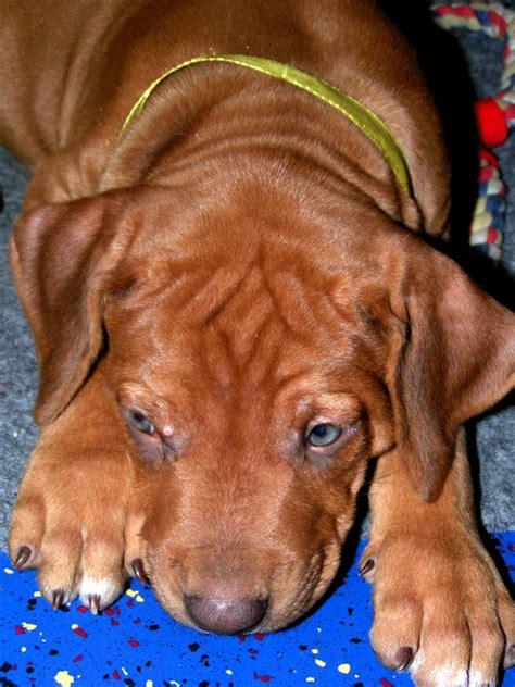 Hunde Vom Grundstück Fernhalten hunde und katzen vom grundst 252 ck fernhalten ostseesuche