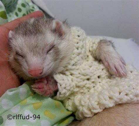 ferret sweaters ferret sweater by rlffud 94 on deviantart
