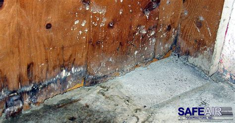 mold remediation archives safeair contractors
