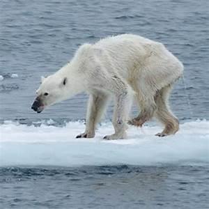 global warming essays in hindi global warming essays in hindi 4.2.2 homework help