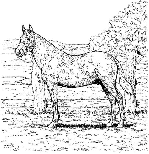 horses to color realistic coloring pages to and print for free