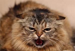 Angry Cat! | Lens: Canon EF 85mm f/1.8 | Cezary Kucharski ...