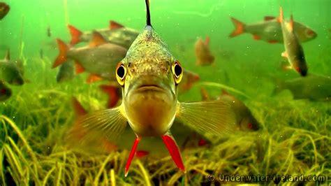 drop shot montage anleitung simfischde angeln und