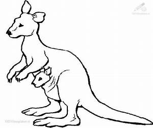 KANGAROO COLORING PAGES « Free Coloring Pages