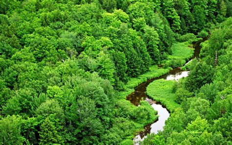 Green Forest And River Wallpaper Hd Wallpapers Green