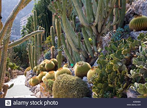 Jardin Exotique Monaco Stock Photo 13365997 Alamy