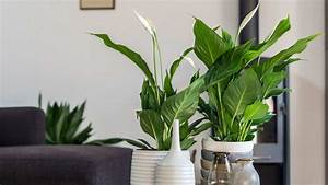 Marc De Café Plantes D Intérieur : uw kamerplanten in topconditie dcm ~ Melissatoandfro.com Idées de Décoration