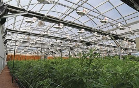 light dep greenhouse light dep marijuana venture