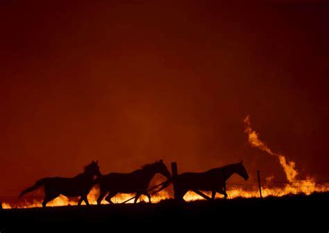 australias fires   killed  billion animals