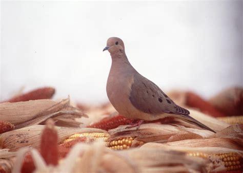 early migratory bird seasons in pennsylvania announced