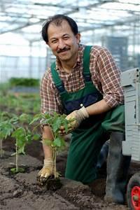 Tomaten Und Gurken Im Gewächshaus : zufrieden mit wetter und anbau demeter g rtnerei sannmann ~ Frokenaadalensverden.com Haus und Dekorationen