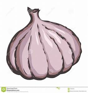 Garlic. Vector drawing stock vector. Image of line, doodle ...