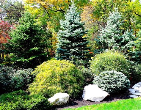 best 25 privacy landscaping ideas on privacy