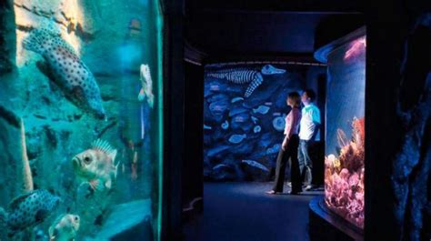 bournemouth oceanarium  dorset guide