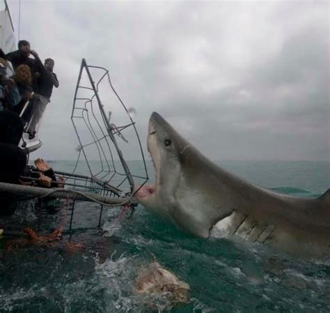 30 Best Shark Attack Victims Images On Pinterest