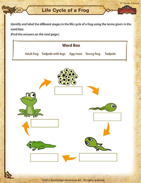 life cycle of a frog printable science worksheets