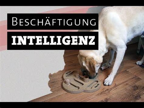 intelligenzspielzeug fuer hunde selber machen