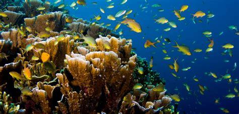 philippines authorities cracking   illegal aquarium