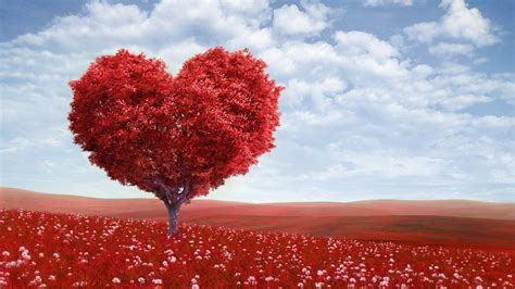 valentines day tree wallpapers hd desktop  mobile