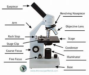 Labeling The Parts Of The Microscopes Including Free Printouts