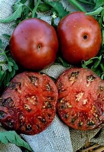 Black Krim Tomatoes growing info | Gardening | Pinterest