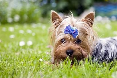 Dog Names Wag Female Male Popular