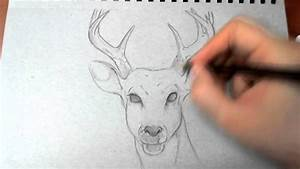 Drawing An Elk - How To Draw Animals